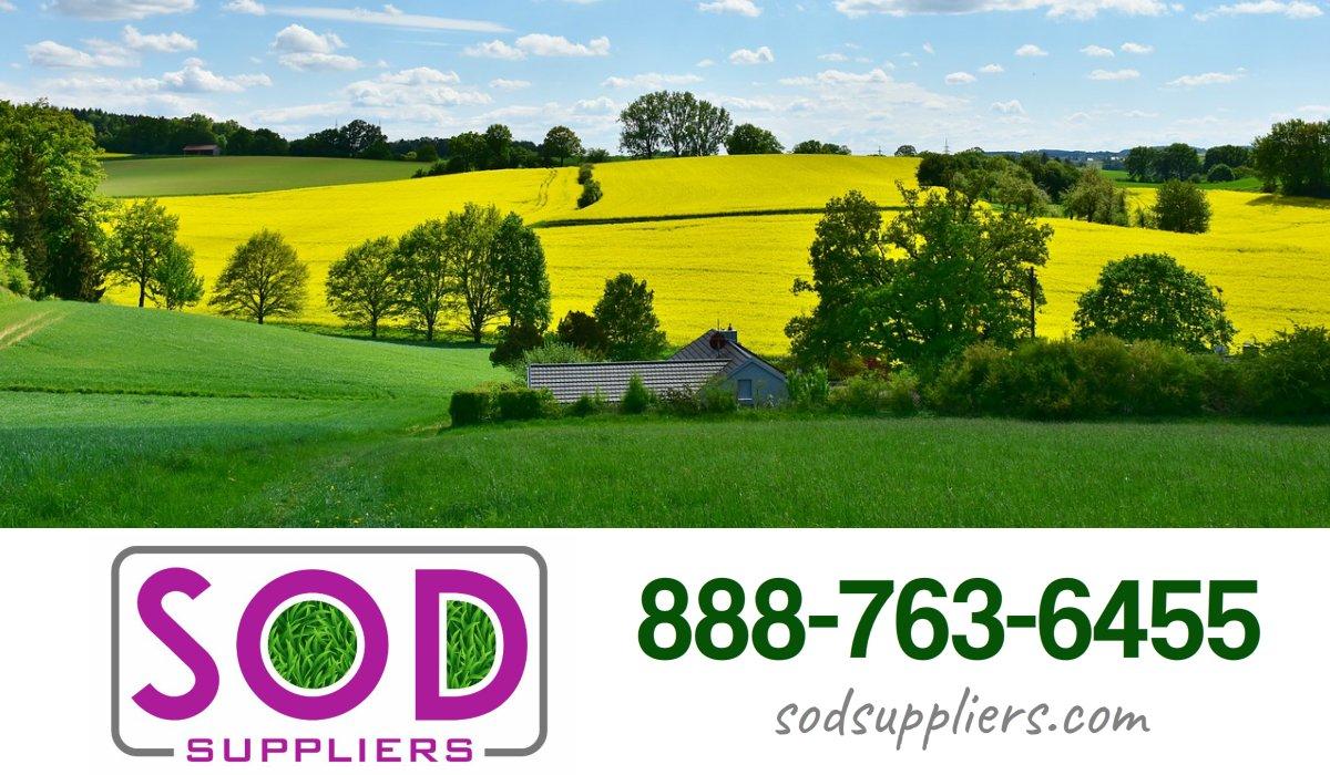 mcdonough-sod-suppliers